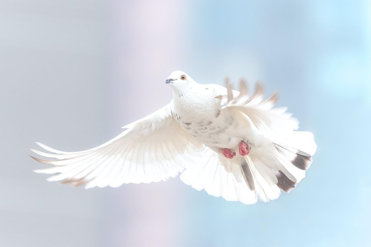 Dlaczego gołąb zawsze trafi do swojego domu. Gołębia mądrość – Jak gołębie wracają do domu?