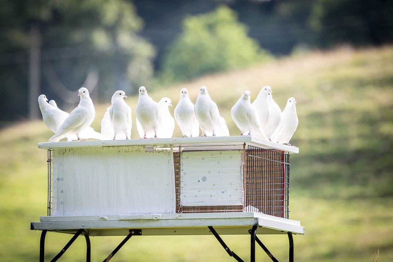 Wspólny gołębnik Wschód