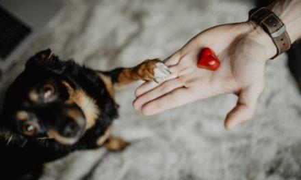 Ekspert od psiego zachowania