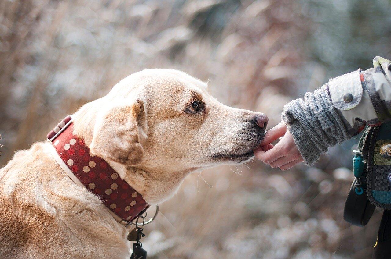 Jak zadbać o swojego psiaka?