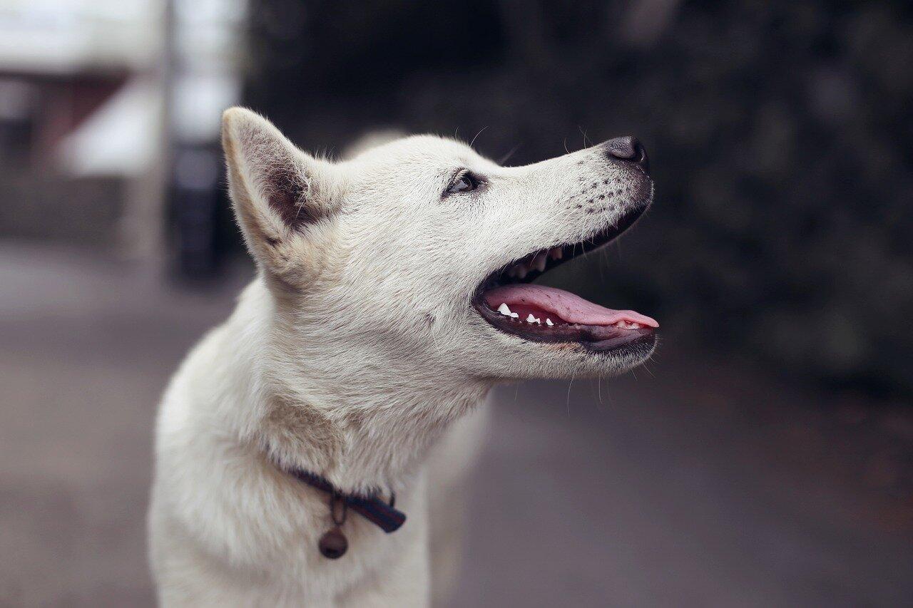Pies i nieobecność właścicieli