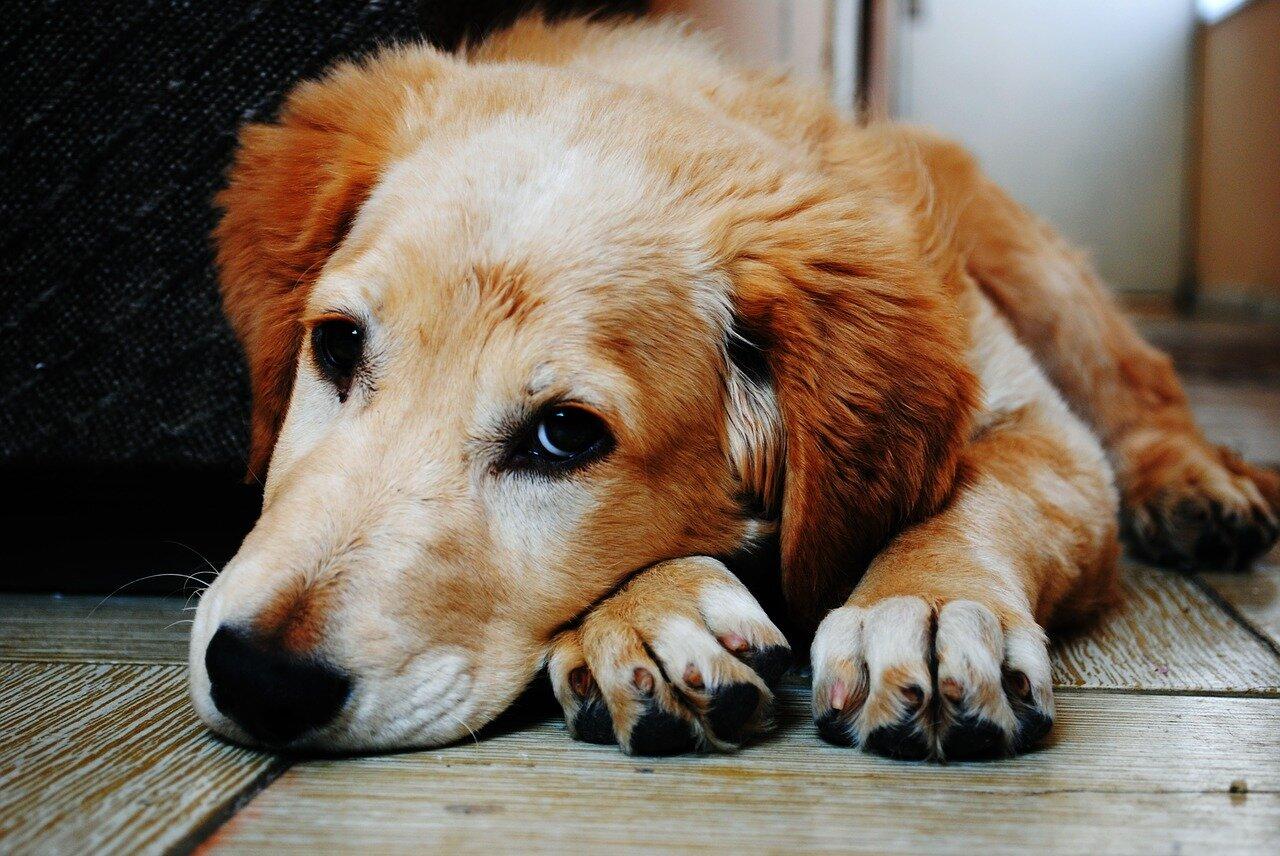 Decydując się na adopcję psa