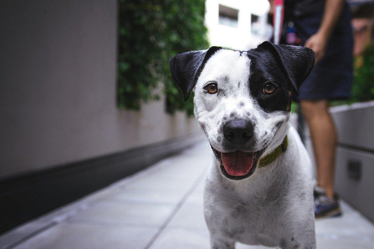 Adopcja psa – Schroniska