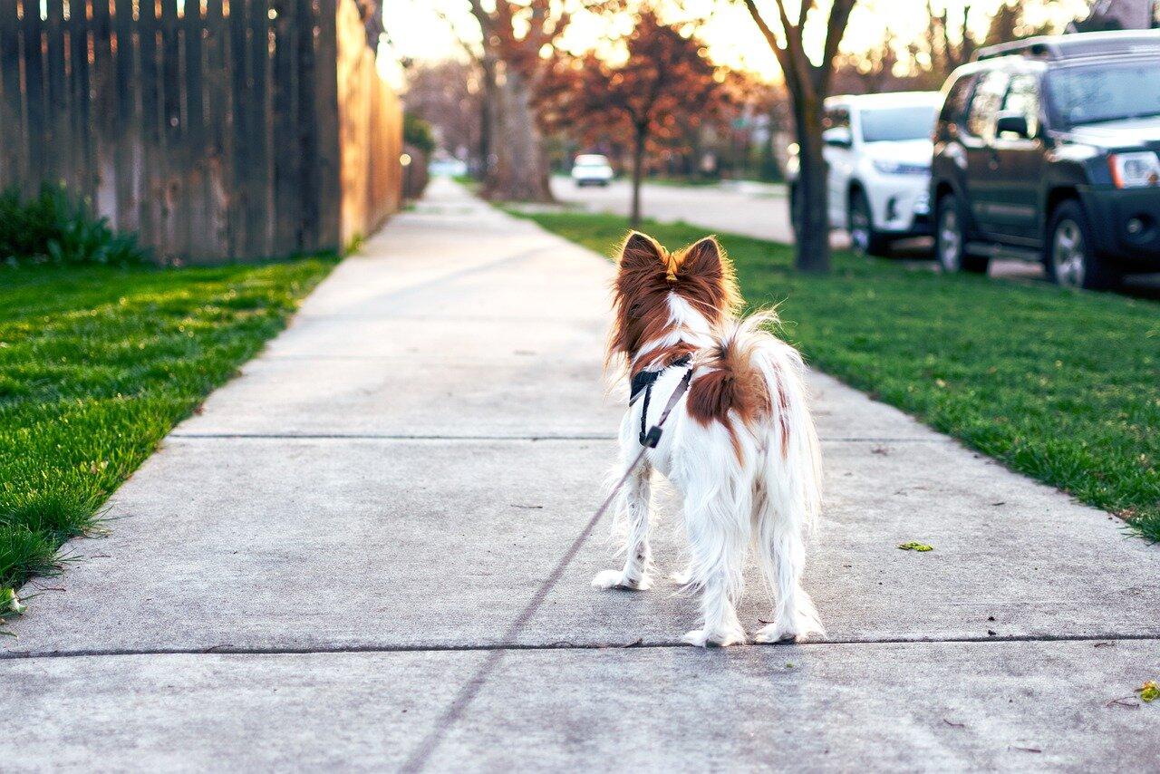 Nauka czystości u psa – najczęstszy przypadek