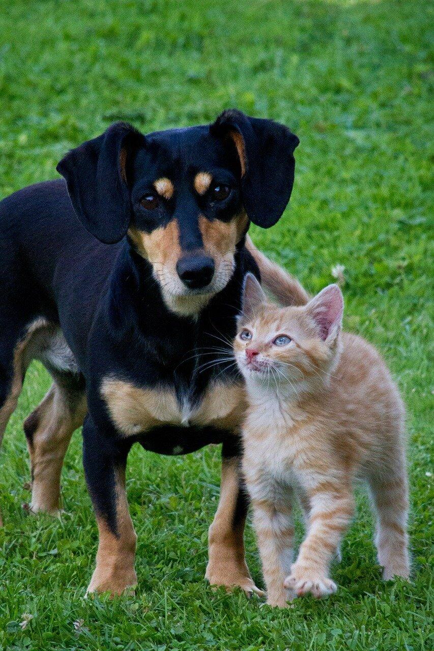 Pies i inne zwierzęta pod jednym dachem
