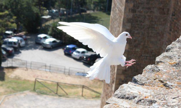 Choroby gołębi – jak zapobiegać i leczyć
