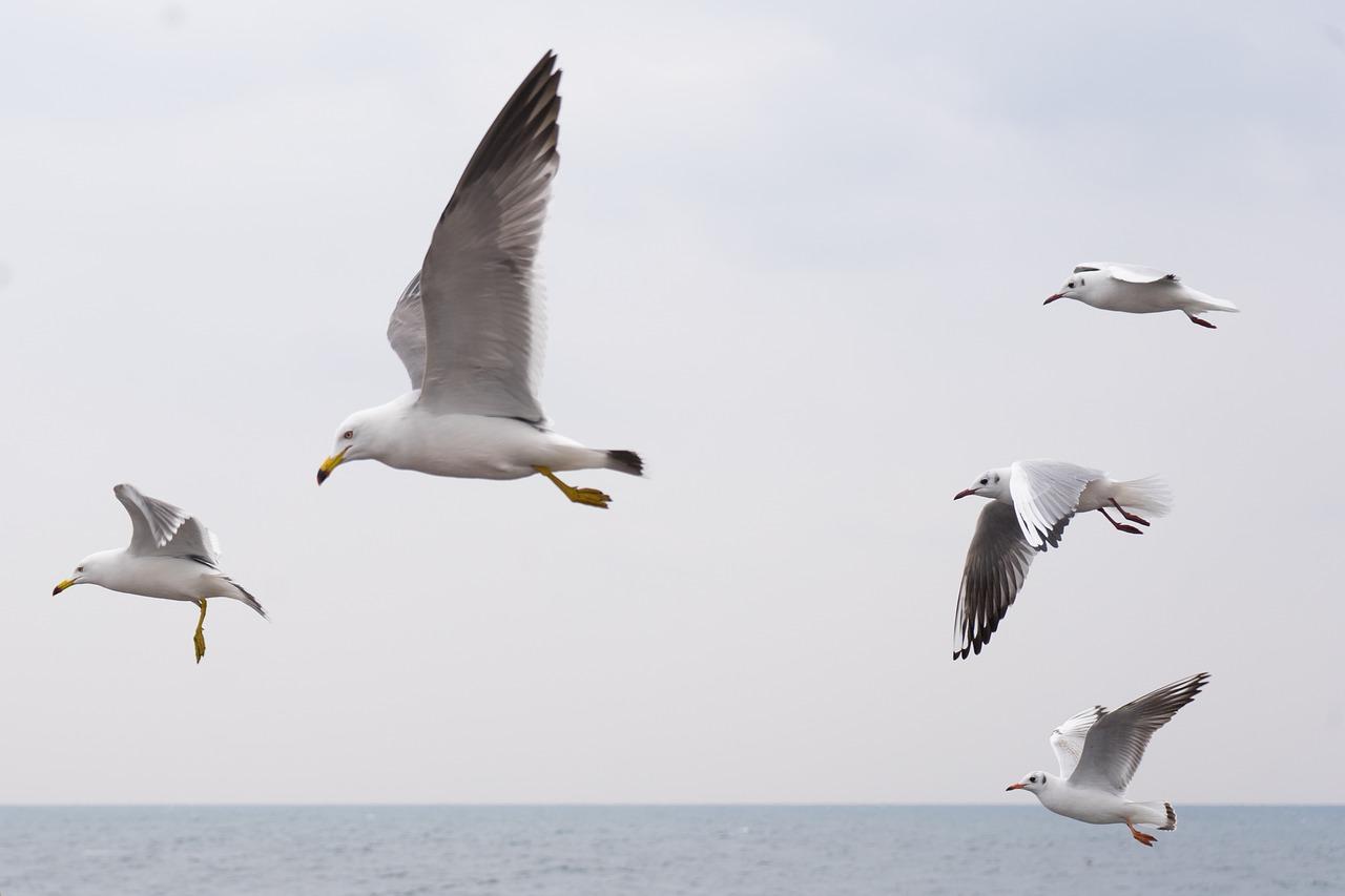Przystosowanie ptaków do lotu i powietrznego trybu życia