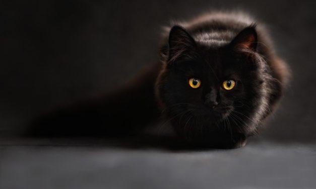 Karma dla kota – na jaką się zdecydować?