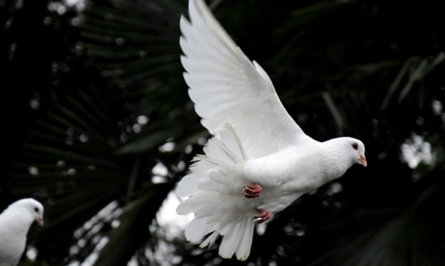 Idealny prezent dla hodowcy gołębi