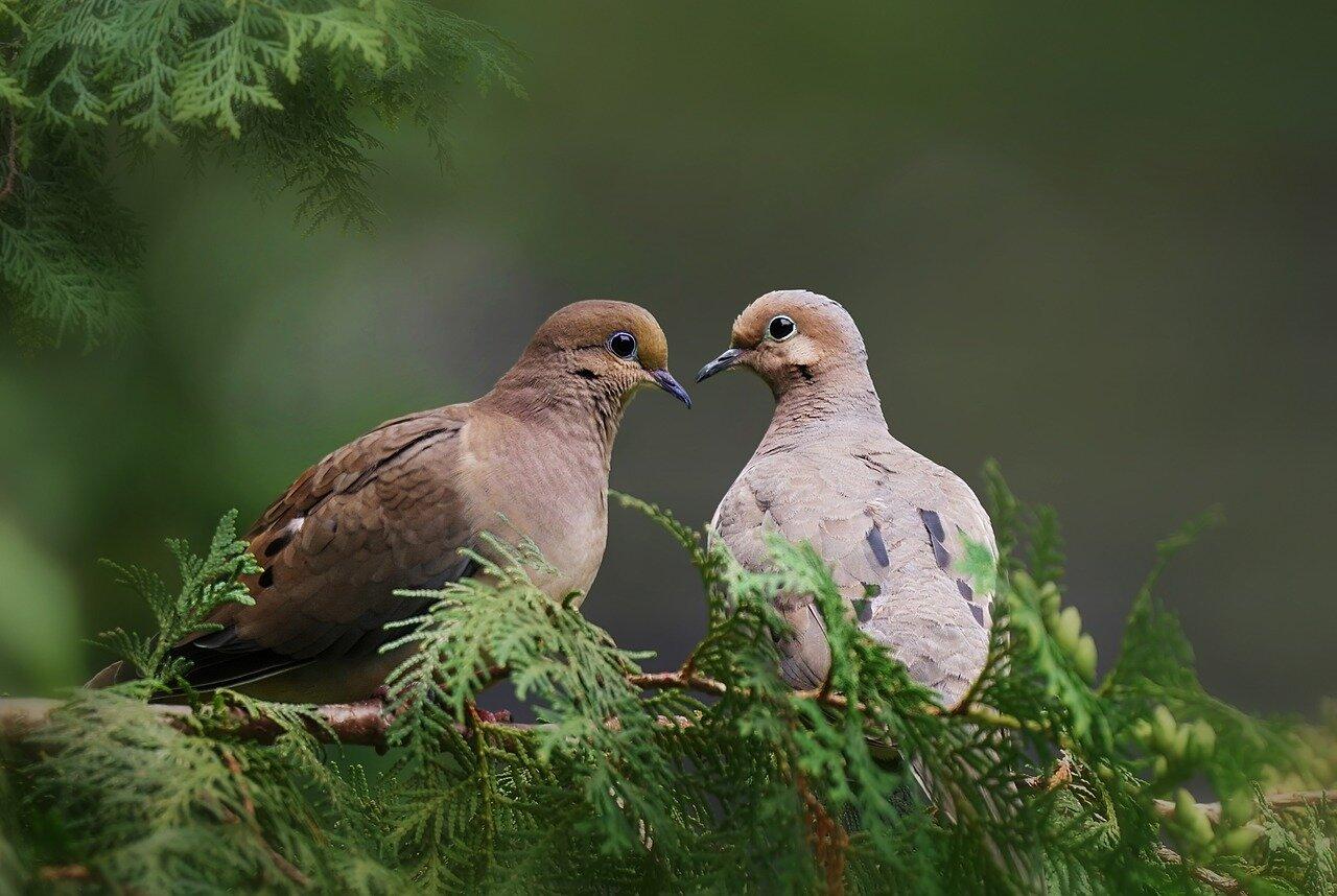 Jak zapobiegać chorobom przenoszonym przez gołębie