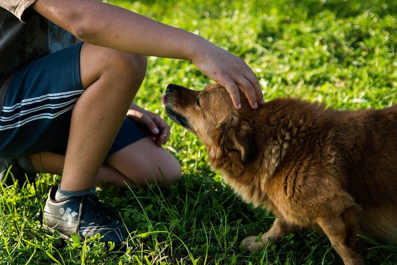 Jakimi domowymi sposobami leczyć świerzb u psa?