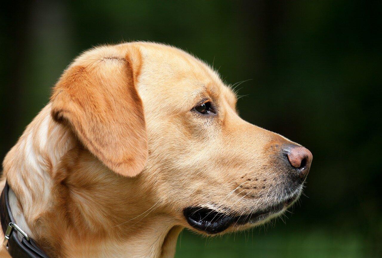 Zaginiony pies – co możemy zrobić?