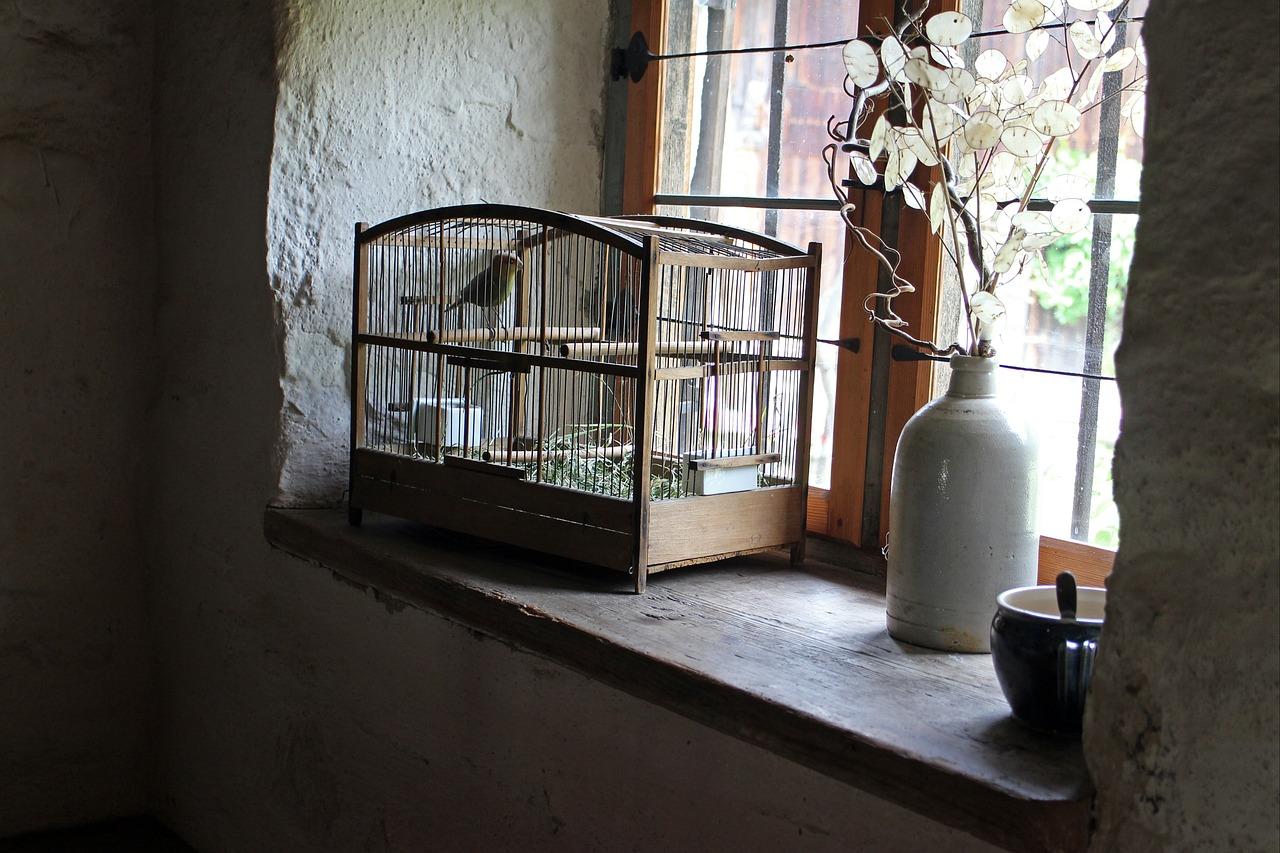 Jak wybrać klatkę dla ptaków, żeby nie czuły się jak w klatce?